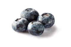 在被隔绝的背景的新近地摘的蓝莓 库存图片