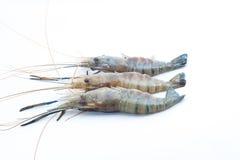 在被隔绝的背景的淡水小龙虾 免版税库存照片