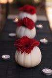 在被雕刻的白色凯斯普尔南瓜的红色大丁草雏菊 图库摄影