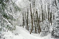 在被雪包围住的冬天森林的路阴云密布的 免版税库存图片