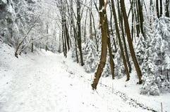 在被雪包围住的冬天森林的路阴云密布的 库存照片