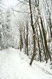 在被雪包围住的冬天森林的路阴云密布的 免版税库存照片