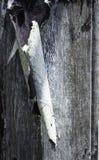在被风化的木头的削皮油漆 免版税图库摄影
