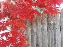 在被风化的篱芭的红色叶子 免版税库存照片