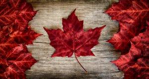 在被风化的雪松的真正的叶子加拿大旗子 库存图片