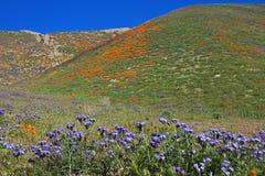 在被绘的小山的早晨,加利福尼亚 免版税库存照片