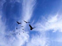 在被绘的蓝色山天空的鸟剪影 库存照片