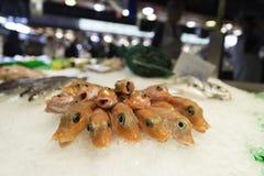 在被击碎的冰显示的新鲜的未加工的虾在鱼市商店商店 免版税库存照片