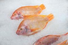 在被击碎的冰的红色罗非鱼鱼 图库摄影