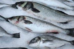 在被击碎的冰的鲜鱼 免版税图库摄影