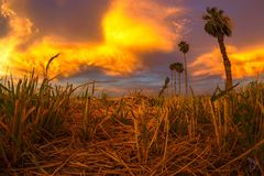 在裁减干草的日落 免版税图库摄影