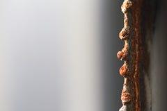 在裁减钢的边缘的红色铁锈 免版税库存图片