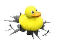在裂缝里面的鸭子 免版税库存图片