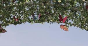 在装饰曲拱的蝴蝶 股票录像