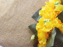 在装饰桌布的Yelow玫瑰色花在袋装的背景空间和构成 免版税图库摄影