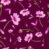 在褐红的背景花的波斯菊花在绽放,无缝的重复样式 向量例证