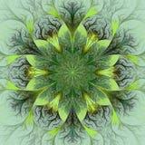 在褐色、绿色和灰色的美丽的分数维花。 图库摄影