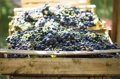 在褐色木头箱子的蓝色葡萄酒 库存图片