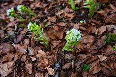 在褐色的新鲜的绿色花离开背景 库存图片