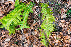 在褐色的新鲜的绿色花离开背景 免版税库存图片