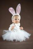 逗人喜爱的小的兔宝宝 免版税库存图片