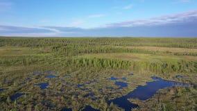 在西伯利亚北部沼泽和taiga的早晨飞行  影视素材