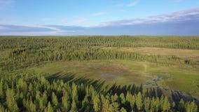 在西伯利亚北部沼泽和taiga的早晨飞行  股票录像