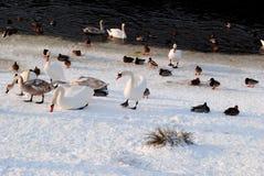 在西伯利亚旋风以后的动物区系 库存照片