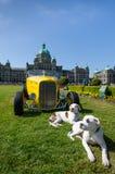 在西北局末平分天期间,两条狗窃取展示 免版税库存图片
