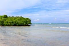 在西北的Cayo Jutias古巴 库存图片