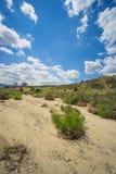 在西南干河床的沙子 免版税库存照片