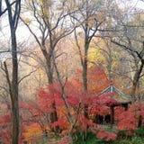 在西夏山,南京中国的红色和黄色叶子 库存照片