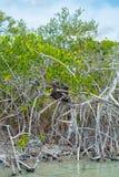 在西安的钾生物圈的植被的白蚁土墩' 库存照片