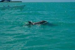 在西安的钾生物圈的海豚游泳' 库存照片