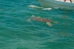 在西安的钾生物圈的海龟' 库存照片