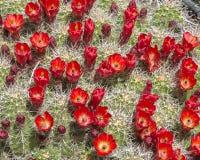在西方外缘足迹的深紫红色杯,过时的问题国家公园, UT 库存图片