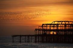 在西方码头的starlings的布赖顿群 库存图片