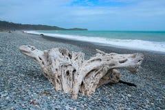 在西海岸Pebble海滩的大漂泊木头  图库摄影