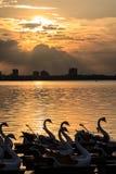 在西湖的日落 图库摄影