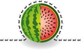 在西瓜附近的蚂蚁 免版税库存图片