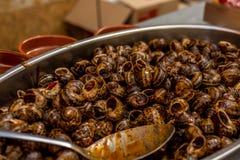 在西红柿酱烹调的蜗牛 图库摄影