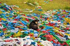 在西藏祷告旗子的狗 免版税库存图片
