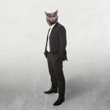 在西装商人的滑稽的蓬松猫。拼贴画 库存图片