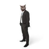 在西装商人的滑稽的蓬松猫。拼贴画 库存照片