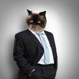 在西装的滑稽的蓬松猫 免版税库存照片