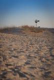 在西部得克萨斯沙漠的孤立风车 库存照片