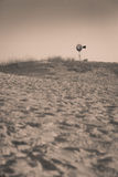 在西部得克萨斯沙漠的孤立风车 免版税库存照片