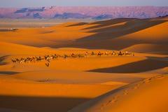 在西部撒哈拉大沙漠的骆驼徒步旅行队 库存照片