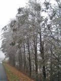 在西部杰斐逊的冰冷的树 免版税库存照片