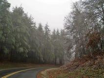 在西部杰斐逊的冰冷的树 免版税图库摄影